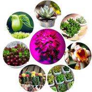 植物生长补光灯,全光谱可调节