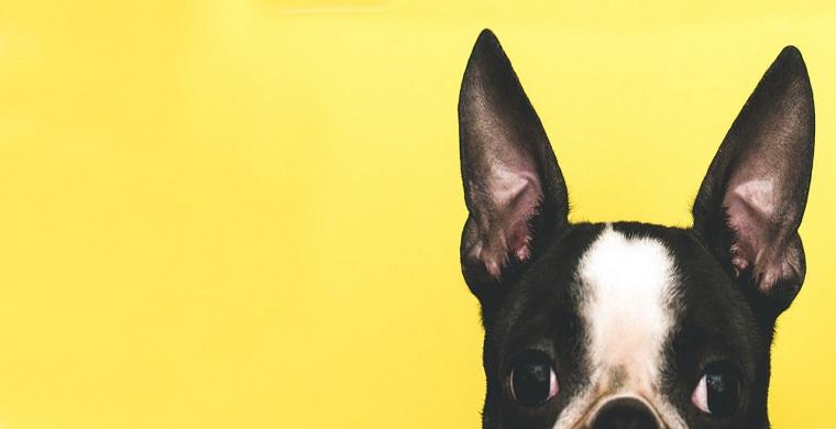 亚马逊链接变狗的原因,亚马逊链接变狗怎么办
